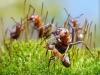 thumbs andrey pavlov 15 Тайная жизнь муравьев, сфотографированная Андреем Павловым