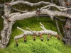 thumbs andrey pavlov 16 Тайная жизнь муравьев, сфотографированная Андреем Павловым