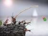 thumbs andrey pavlov 20 Тайная жизнь муравьев, сфотографированная Андреем Павловым