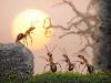 thumbs andrey pavlov 21 Тайная жизнь муравьев, сфотографированная Андреем Павловым
