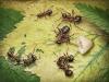 thumbs andrey pavlov 24 Тайная жизнь муравьев, сфотографированная Андреем Павловым