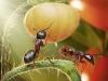 thumbs andrey pavlov 25 Тайная жизнь муравьев, сфотографированная Андреем Павловым