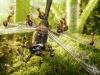 thumbs andrey pavlov 26 Тайная жизнь муравьев, сфотографированная Андреем Павловым