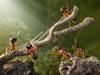 thumbs andrey pavlov 27 Тайная жизнь муравьев, сфотографированная Андреем Павловым
