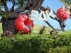 thumbs andrey pavlov 28 Тайная жизнь муравьев, сфотографированная Андреем Павловым