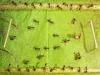 thumbs andrey pavlov 5 Тайная жизнь муравьев, сфотографированная Андреем Павловым