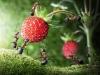 thumbs andrey pavlov 6 Тайная жизнь муравьев, сфотографированная Андреем Павловым