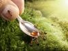 thumbs andrey pavlov 8 Тайная жизнь муравьев, сфотографированная Андреем Павловым