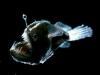 thumbs horrible 1 4 Самые жуткие обитатели морских глубин