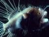 thumbs horrible 1 5 Самые жуткие обитатели морских глубин