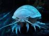 thumbs horrible 8 Самые жуткие обитатели морских глубин