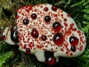 thumbs bleeding tooth fungus 1 Топ 12. Самые жуткие растения планеты Земля