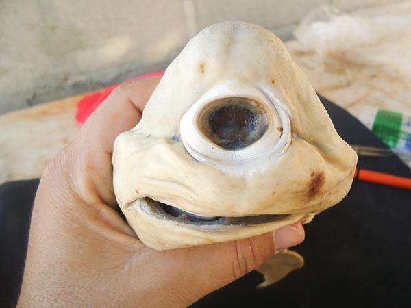 http://unnatural.ru/wp-content/gallery/cyclops-shark/cyclops_shark-_1.jpg