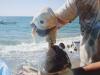 thumbs cyclops shark  4 Зубастый Циклоп: в Мексике поймана одноглазая акула альбинос