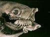 thumbs cymothoa exigua 3 Топ 13. Самые страшные паразиты в мире