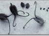 thumbs devils claw 4 Топ 12. Самые жуткие растения планеты Земля