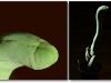 thumbs dick shaped plants 3 Топ 12. Самые жуткие растения планеты Земля