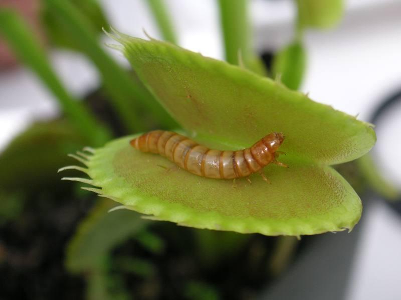 12 самые жуткие растения планеты земля