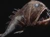 thumbs horrible 4 Самые жуткие обитатели морских глубин