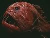thumbs horrible 4 1 Самые жуткие обитатели морских глубин