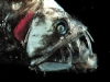 thumbs horrible 5 Самые жуткие обитатели морских глубин