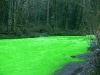 thumbs goldstream river 4 Кислотный воды реки Голдстрим
