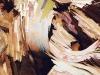 thumbs inst 28 Бразильский художник Энрике Оливейра 'пустил корни' в художественной галерее «Национального музея искусства Африки»