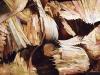 thumbs inst 29 Бразильский художник Энрике Оливейра 'пустил корни' в художественной галерее «Национального музея искусства Африки»
