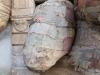 thumbs inst 71 Бразильский художник Энрике Оливейра 'пустил корни' в художественной галерее «Национального музея искусства Африки»