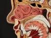 thumbs l n 1 Уроки художественной анатомии от Лизы Нильсон