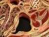 thumbs l n 8 Уроки художественной анатомии от Лизы Нильсон