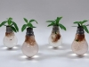 thumbs light bulb terrarium 2 1 Топ 5: живые террариумы в лампочках