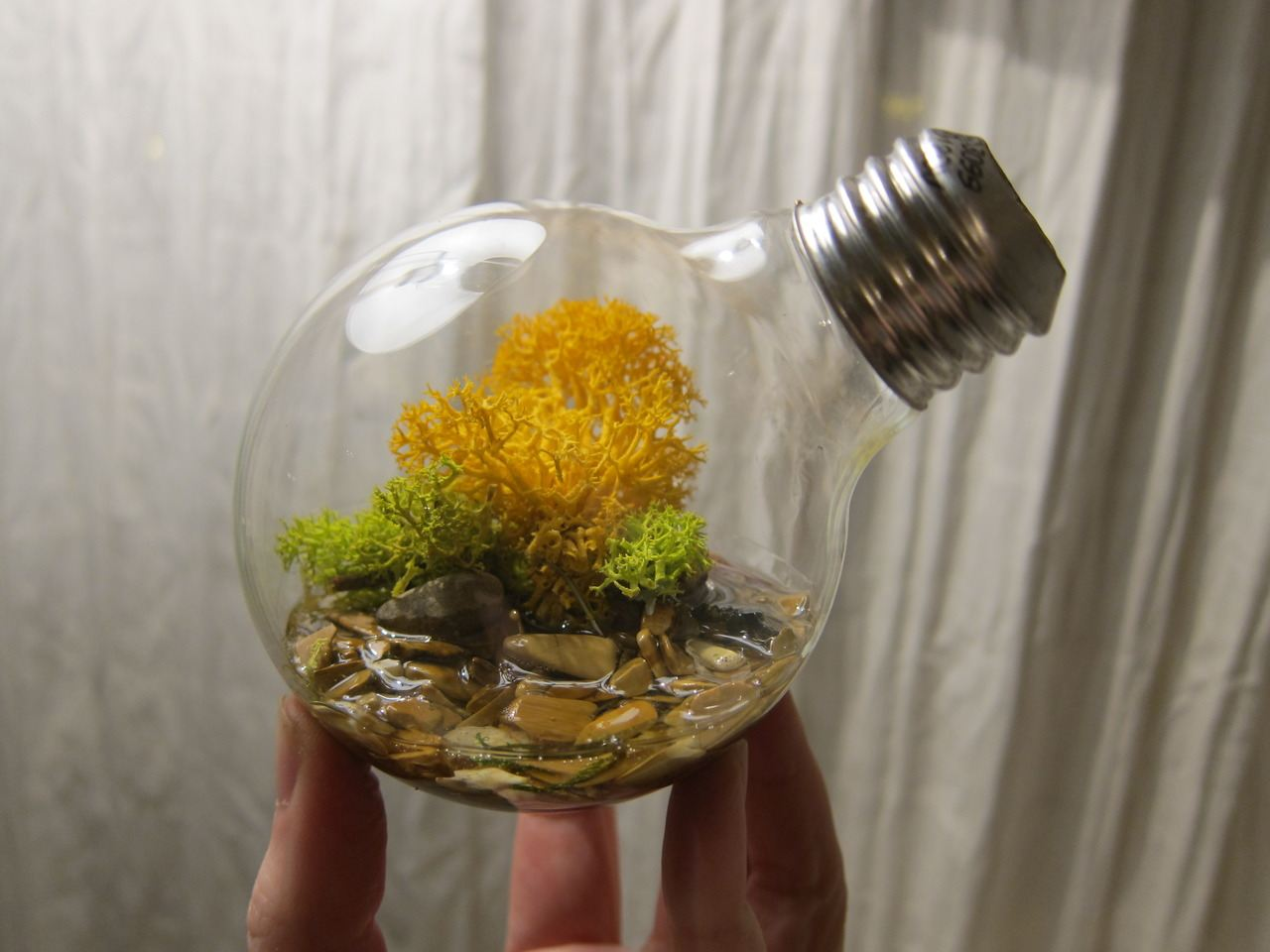 http://unnatural.ru/wp-content/gallery/light-bulb-terrarium-4/light-bulb-terrarium-4_1.jpg