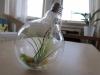 thumbs light bulb terrarium 4 2 Топ 5: живые террариумы в лампочках