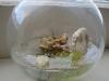thumbs light bulb terrarium 4 3 Топ 5: живые террариумы в лампочках