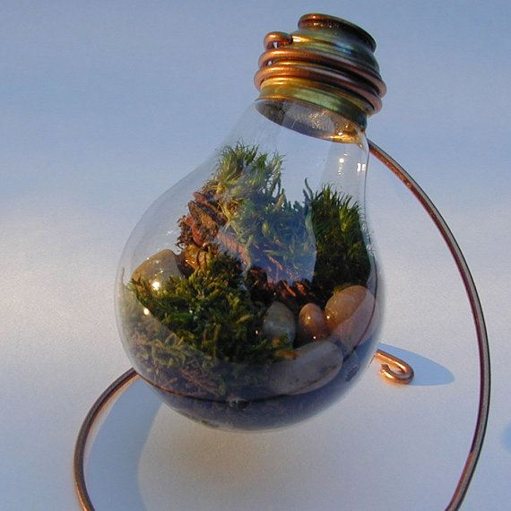 http://unnatural.ru/wp-content/gallery/light-bulb-terrarium-5/light-bulb-terrarium-5_1.jpg