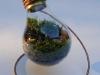 thumbs light bulb terrarium 5 3 Топ 5: живые террариумы в лампочках