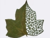 http://unnatural.ru/wp-content/gallery/lorenzo-duran/thumbs/thumbs_lorenzo_duran_leaf_art_8.jpg