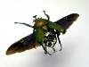 thumbs mike libby 10 Тайная жизнь муравьев, сфотографированная Андреем Павловым