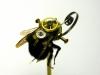 thumbs mike libby 12 Тайная жизнь муравьев, сфотографированная Андреем Павловым