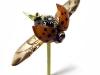 thumbs mike libby 16 Тайная жизнь муравьев, сфотографированная Андреем Павловым
