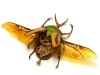 thumbs mike libby 3 Тайная жизнь муравьев, сфотографированная Андреем Павловым