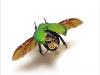 thumbs mike libby 5 Тайная жизнь муравьев, сфотографированная Андреем Павловым
