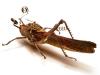 thumbs mike libby 6 Тайная жизнь муравьев, сфотографированная Андреем Павловым