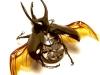 thumbs mike libby 8 Тайная жизнь муравьев, сфотографированная Андреем Павловым