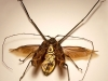thumbs mike libby 9 Тайная жизнь муравьев, сфотографированная Андреем Павловым