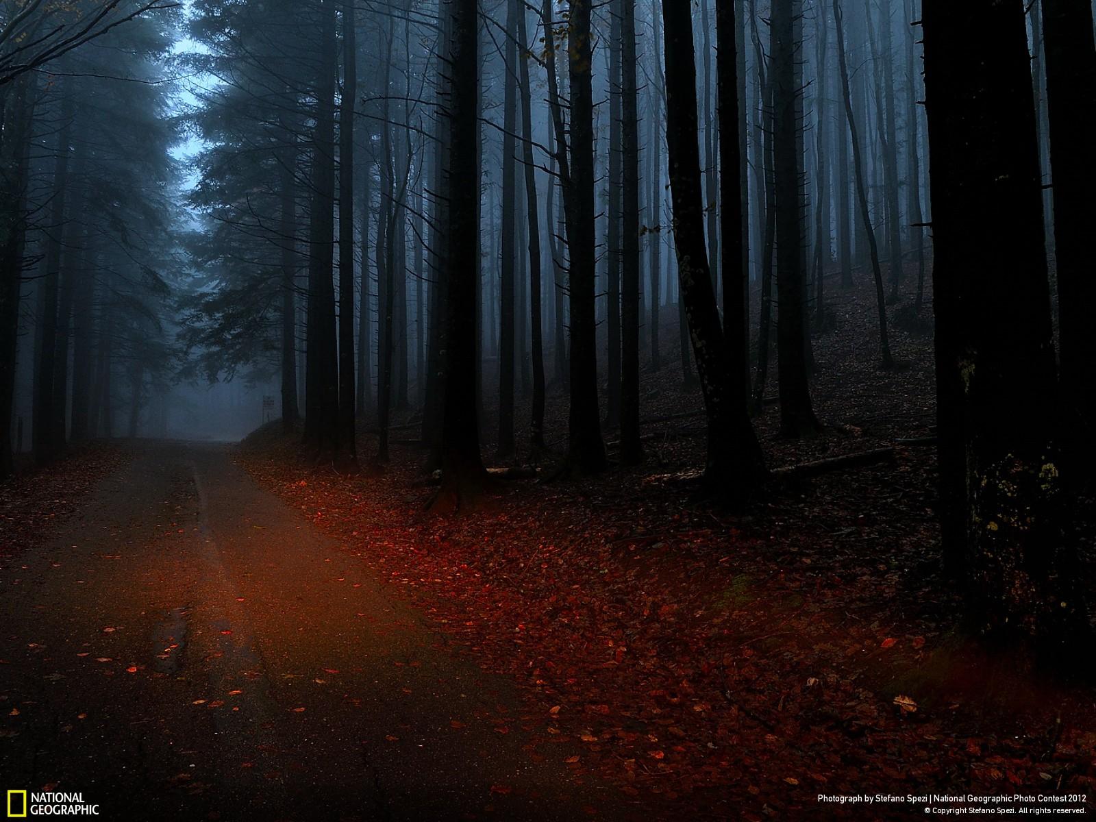 10 Лучшие фотографии за 2012 год по версии National Geographic