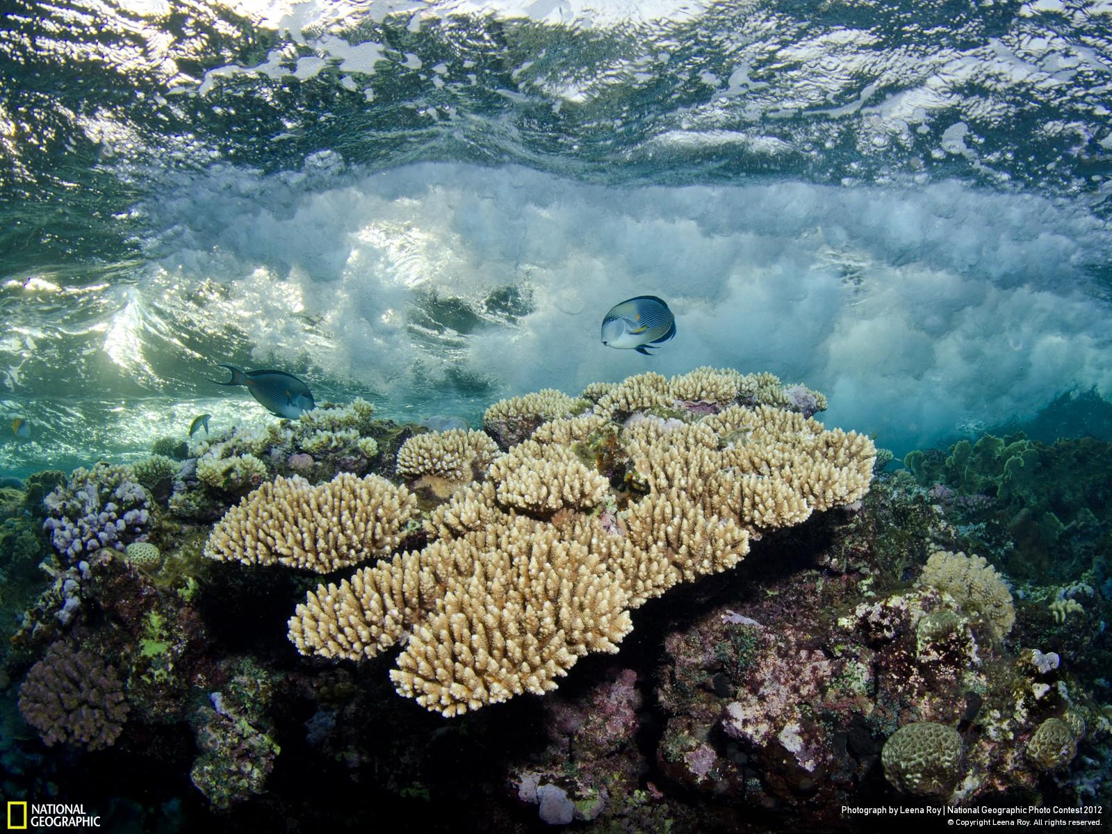 15 Лучшие фотографии за 2012 год по версии National Geographic