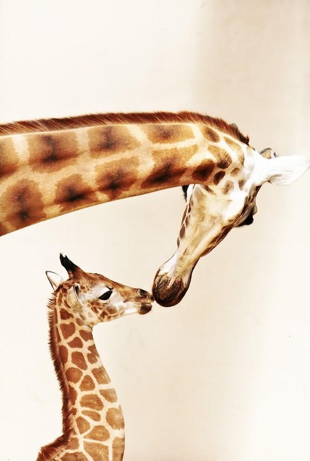 16 Лучшие фотографии за 2012 год по версии National Geographic