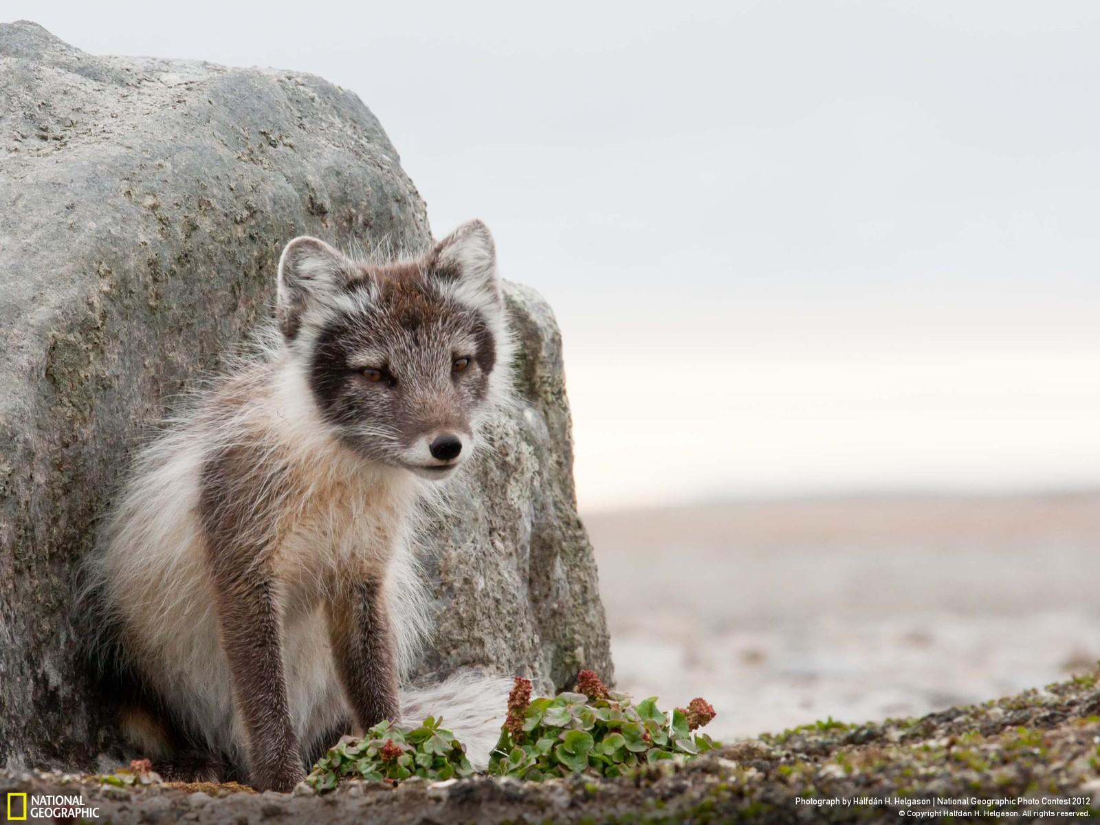 22 Лучшие фотографии за 2012 год по версии National Geographic